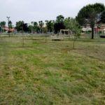 Parco Via Francia: 22 nuovi lecci per proseguire nell'opera di riqualificazione