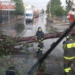 Caduto un albero sulla Nettunense, danneggiata una condotta di gas a Campoleone