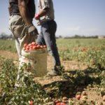 Nel territorio pontinolotta all'illegalità nel trasporto dei braccianti agricoli