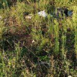 Abbandono rifiuti: dopo tante segnalazioni andate a vuoto, i residenti di Vallelata sono intervenuti in prima persona