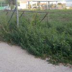 Nonostante l'affidamento, l'area verde di Via Grecia resta senza manutenzione