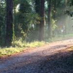"""""""Benvenuti sulla Duna. Bella e fragile"""" l'iniziativa del Parco Nazionale del Circeo."""