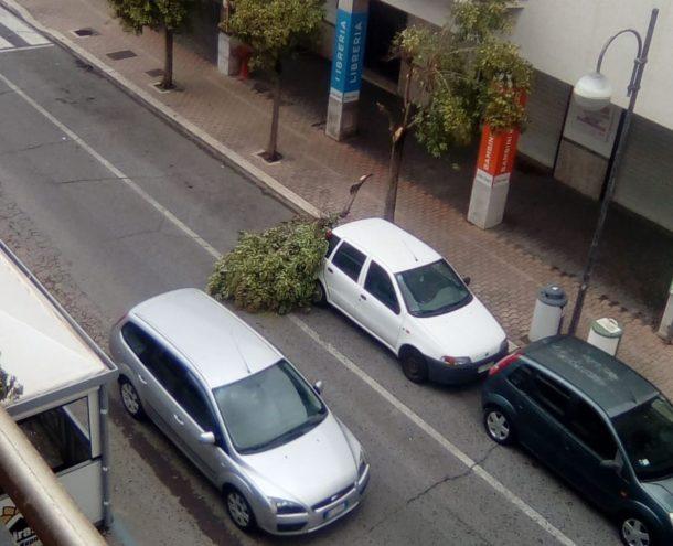 Ramo spezzato dal vento cade su un\'auto su Via dei Lauri   News di ...