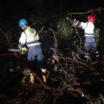 Alberi divelti dal maltempo: Protezione Civile al lavoro per tutta la notte