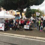 """Amici di Birillo non si arrende: """"Vogliamo difendere i diritti dei nostri amici a quattro zampe"""""""