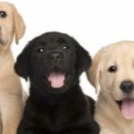Aprilia Possibile dona crocchette e coperte per i cani ad Amici di Birillo