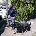 LA STORIA – Jamil, l'infallibile cane antidroga della Polizia di Frontiera
