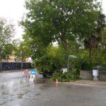 """Aprilia Possibile e """"il Bosco Urbano"""" criticano la gestione dei Platani."""