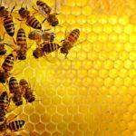 Aprilia per la Giornata Internazionale delle Api: insetti vitali per l'uomo.
