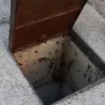 Blatte e topi nella città di Aprilia: serve intervento immediato.