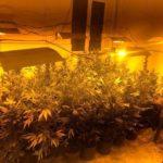Aprilia, più di 40 kg di marijuana in casa: in manette un 33enne.