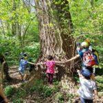 La Tenuta Calissoni Bulgari aderisce alla Giornata Mondiale dell'Albero.