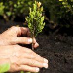 Europa Verde scende in campo per il futuro: un albero per ogni nuovo nato
