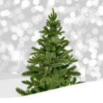 Latina, il 7 e 8 gennaio raccolta straordinaria degli alberi di Natale.