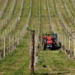 Regione Lazio: ok a spostamenti per attività agricola alimentare e conduzione animali da cortile.