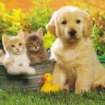 Comune di Aprilia: una raccolta fondi per alimenti a colonie feline e cani liberi.