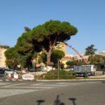 Il Bosco Urbano si scaglia contro le potature ai pini di Piazza Roma.